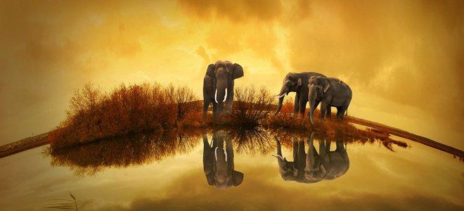 семья слонов в лесах паттайи